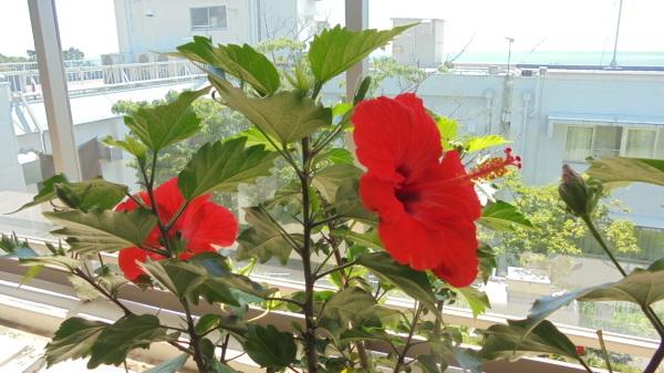 夏の始まり_f0299108_15334190.jpg