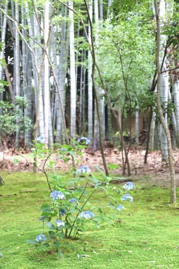 竹の寺 地蔵院_e0048413_18212701.jpg