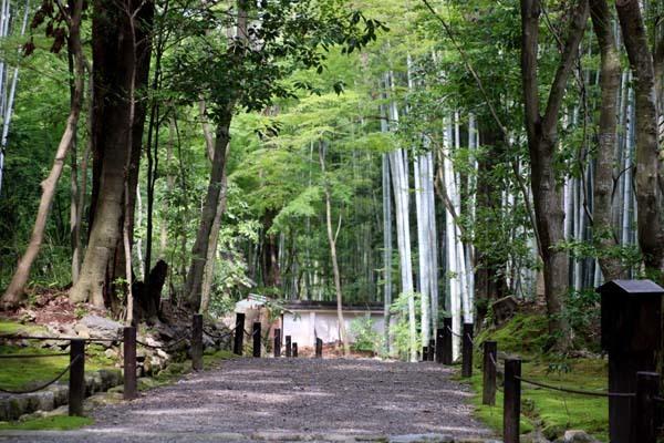 竹の寺 地蔵院_e0048413_18213357.jpg