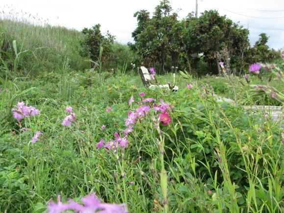 観察園は花盛りです_f0354435_11224558.jpg