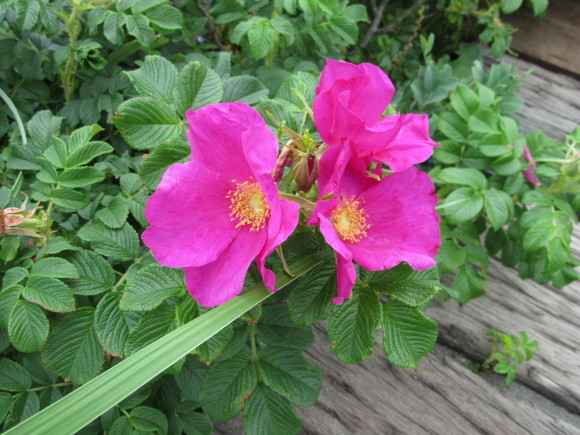 観察園は花盛りです_f0354435_11262672.jpg