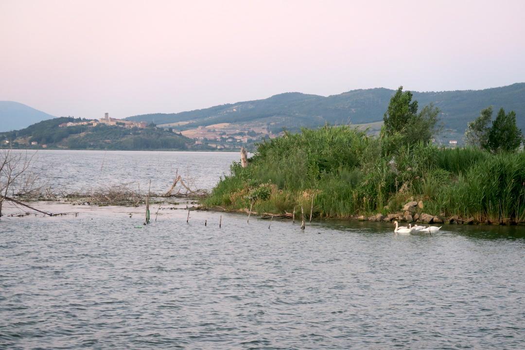 白鳥の親子たそがれのトラジメーノ湖に_f0234936_5405227.jpg