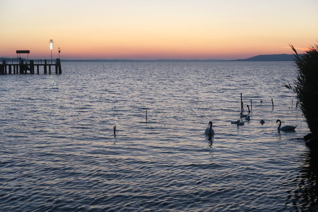 白鳥の親子たそがれのトラジメーノ湖に_f0234936_546434.jpg