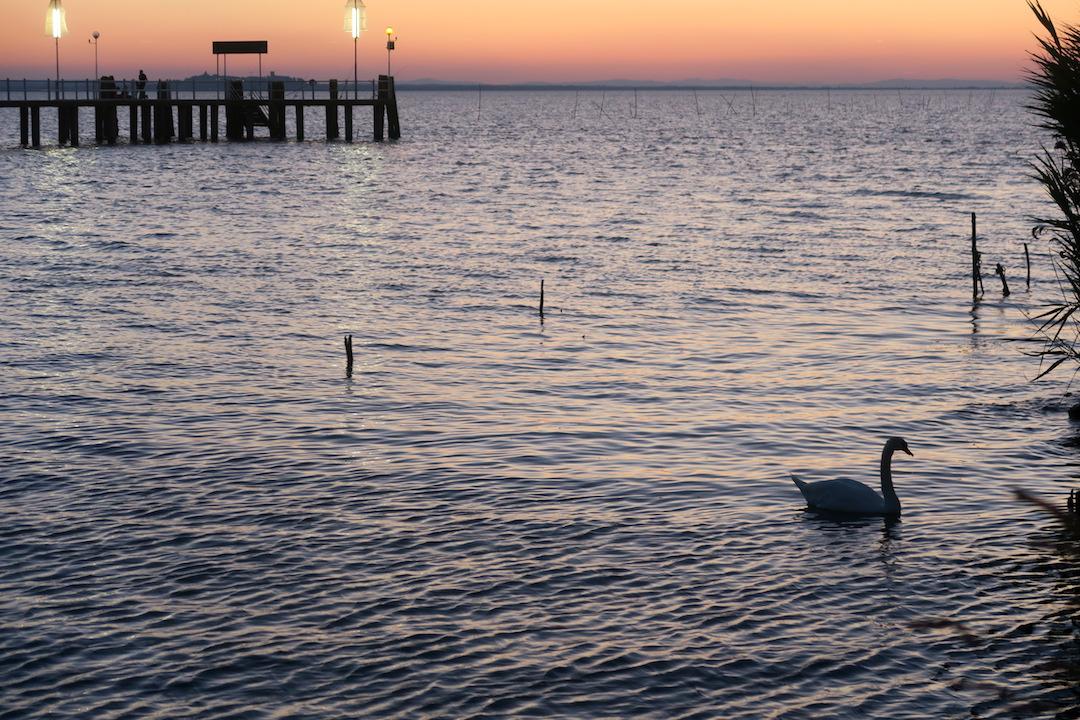 白鳥の親子たそがれのトラジメーノ湖に_f0234936_5574266.jpg