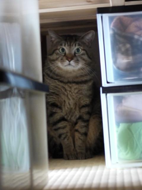 猫のお留守番 るーくん編。_a0143140_22251960.jpg