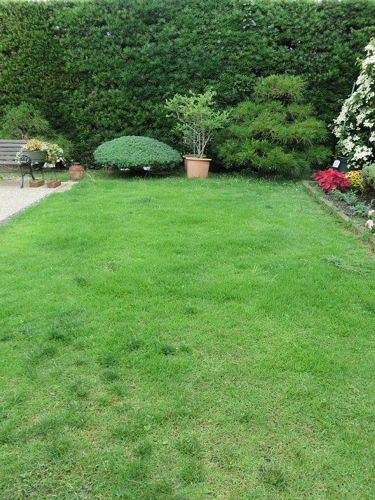 2019年7月24日 令和2度目の芝刈り作業 !(^^)!_b0341140_1562373.jpg