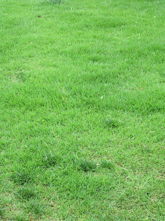 2019年7月24日 令和2度目の芝刈り作業 !(^^)!_b0341140_1563146.jpg