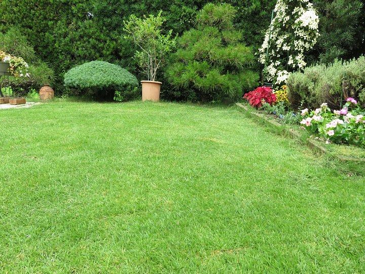 2019年7月24日 令和2度目の芝刈り作業 !(^^)!_b0341140_158234.jpg