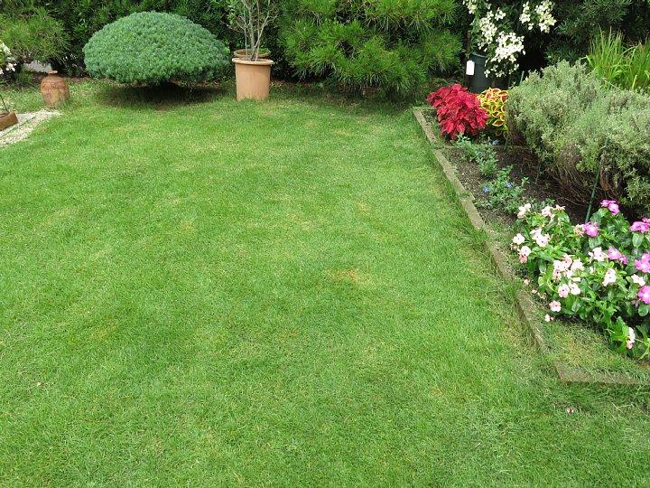 2019年7月24日 令和2度目の芝刈り作業 !(^^)!_b0341140_1583660.jpg