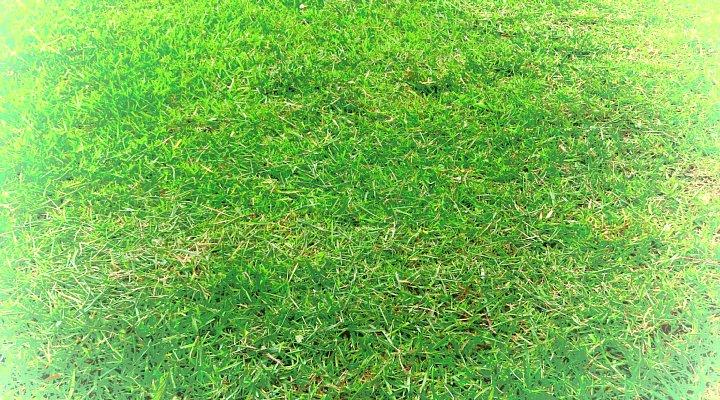 2019年7月24日 令和2度目の芝刈り作業 !(^^)!_b0341140_158390.jpg