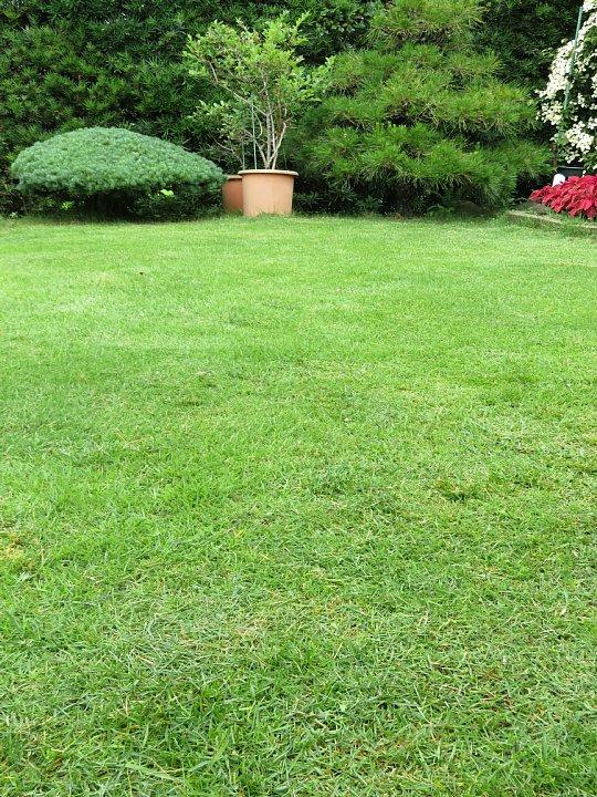 2019年7月24日 令和2度目の芝刈り作業 !(^^)!_b0341140_1584733.jpg