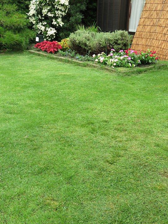 2019年7月24日 令和2度目の芝刈り作業 !(^^)!_b0341140_1585730.jpg