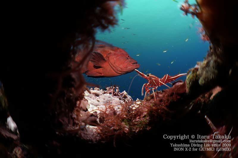 水中マイクロ魚眼レンズ(虫の目レンズ)で撮る!_b0186442_07314044.jpg