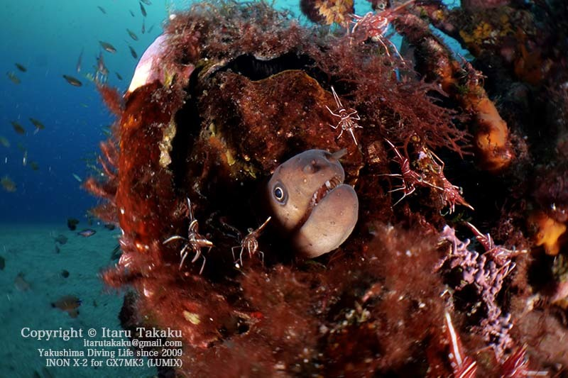 水中マイクロ魚眼レンズ(虫の目レンズ)で撮る!_b0186442_07314095.jpg