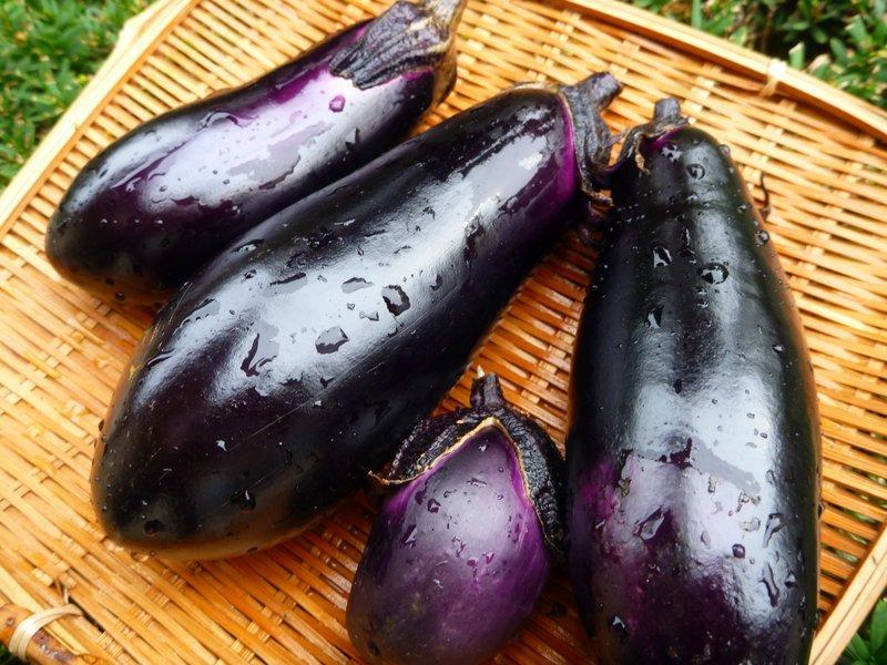 家庭菜園生活2019 7月第1週_e0037849_22324084.jpg