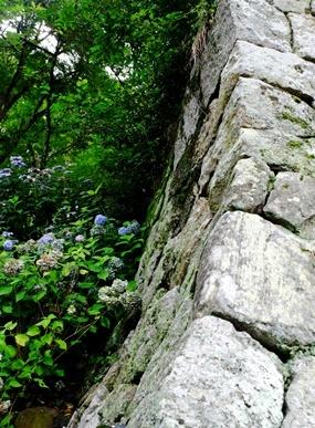 矢田寺の紫陽花とカサブランカ♪_b0194861_18215494.jpg