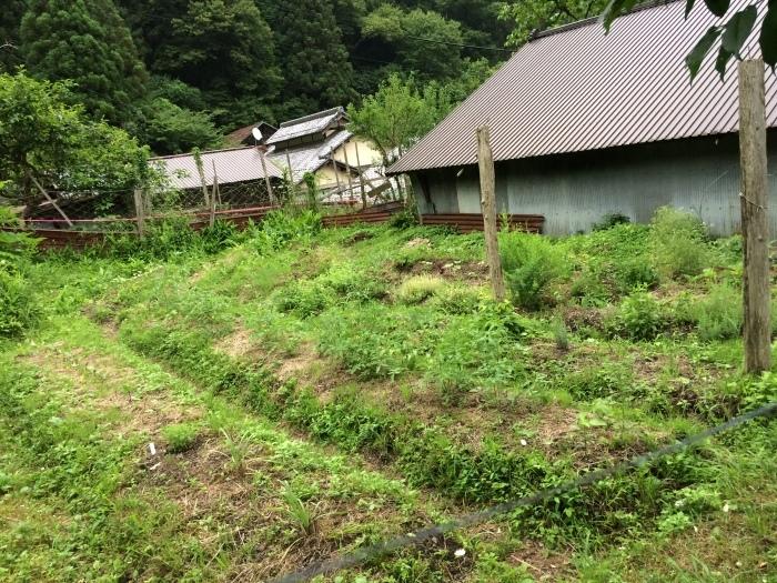 梅雨に入った畑_b0057979_22141293.jpg