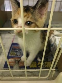 【猫・移動先募集】センター(支所)収容子猫(7/6訪問)_f0242002_19292528.jpg