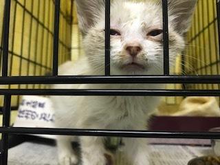 【猫・移動先募集】センター(支所)収容子猫(7/6訪問)_f0242002_19374347.jpg