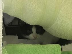 【猫・移動先募集】センター(支所)収容子猫(7/6訪問)_f0242002_19393658.jpg