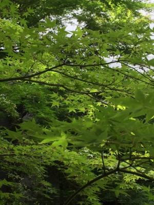 庭園美堪能_b0151911_00242497.jpg