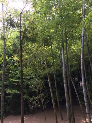 庭園美堪能_b0151911_00250828.jpg