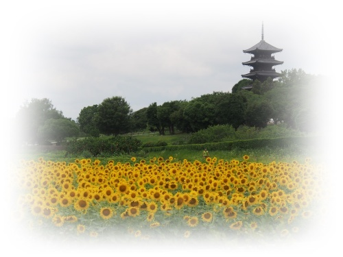 ヒマワリと五重塔_c0026824_14480016.jpg