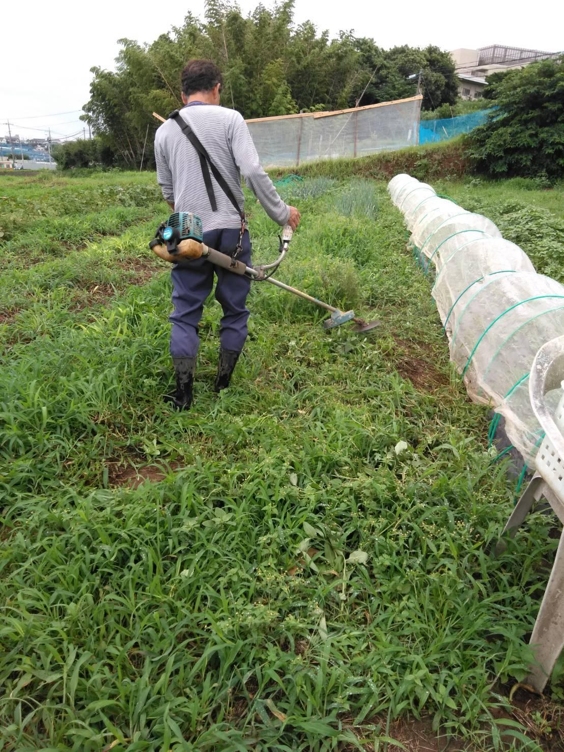 草刈り殆ど トマトや茄子の下葉切り取り 畝間の雑草取り・・_c0222448_12265887.jpg