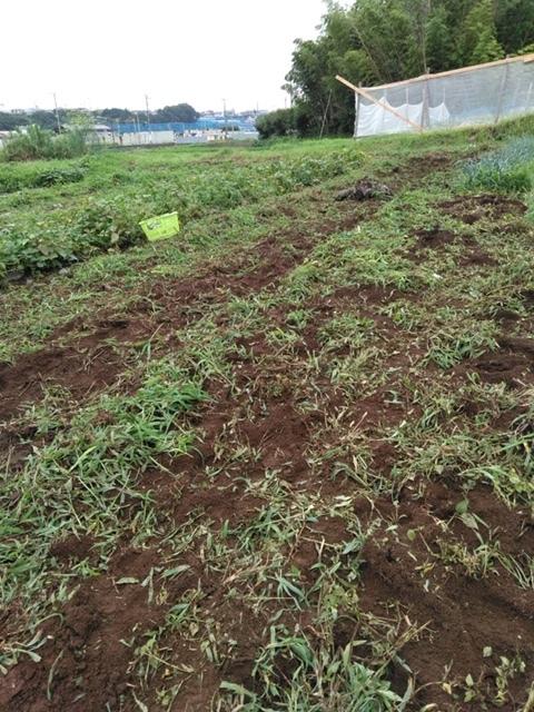 草刈り殆ど トマトや茄子の下葉切り取り 畝間の雑草取り・・_c0222448_13303197.jpg