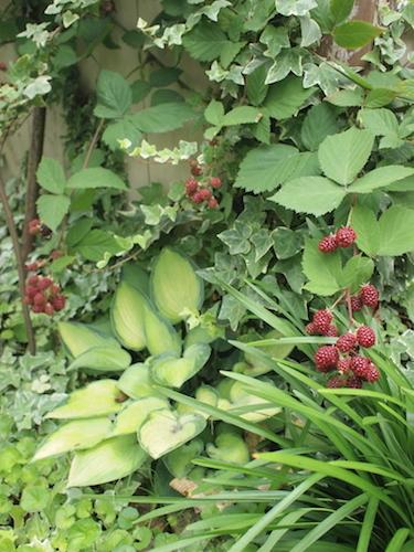 7月の庭_a0335560_23032305.jpg