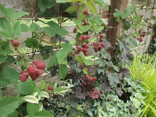 7月の庭_a0335560_23032307.jpg
