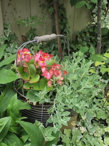 7月の庭_a0335560_23034412.jpg