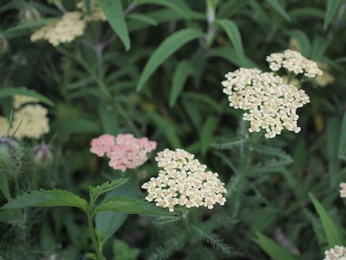 7月の庭_a0335560_23052171.jpg