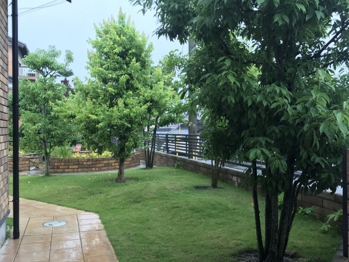 梅雨の晴れ間に出来ること_b0100062_07595483.jpeg