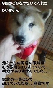 コロじいさん 新生活スタート!_f0242002_22340493.jpg