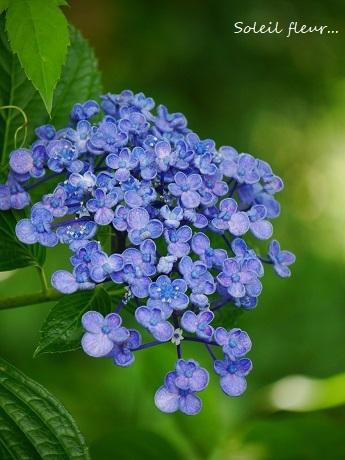 青のハーモニーが聴こえる季節☆_c0098807_16565721.jpg