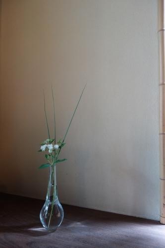 七夕に咲く庭の花_a0197730_00424930.jpg