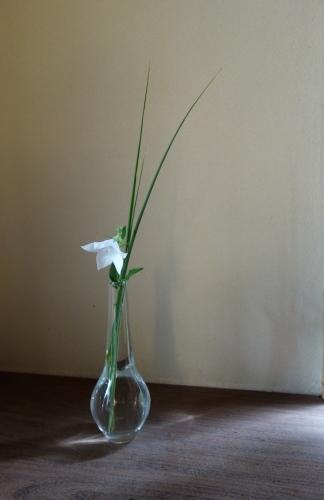 七夕に咲く庭の花_a0197730_00425790.jpg