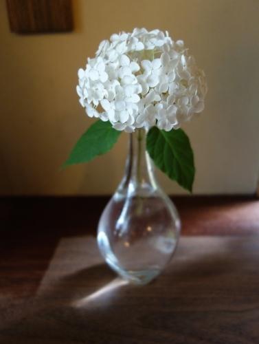 七夕に咲く庭の花_a0197730_00433834.jpg