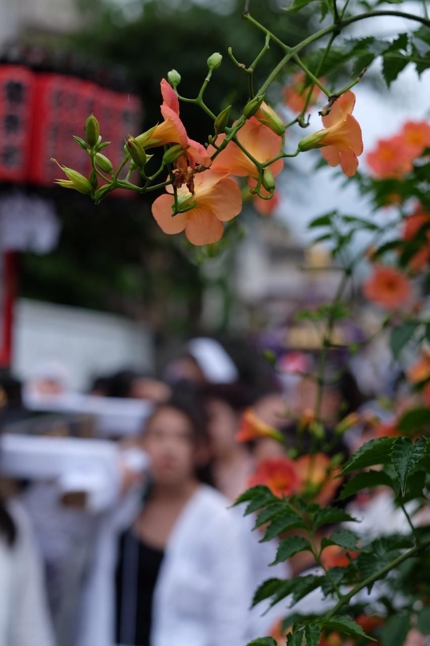 令和元年 秋谷神明社御祭禮−5_f0156448_19264607.jpg