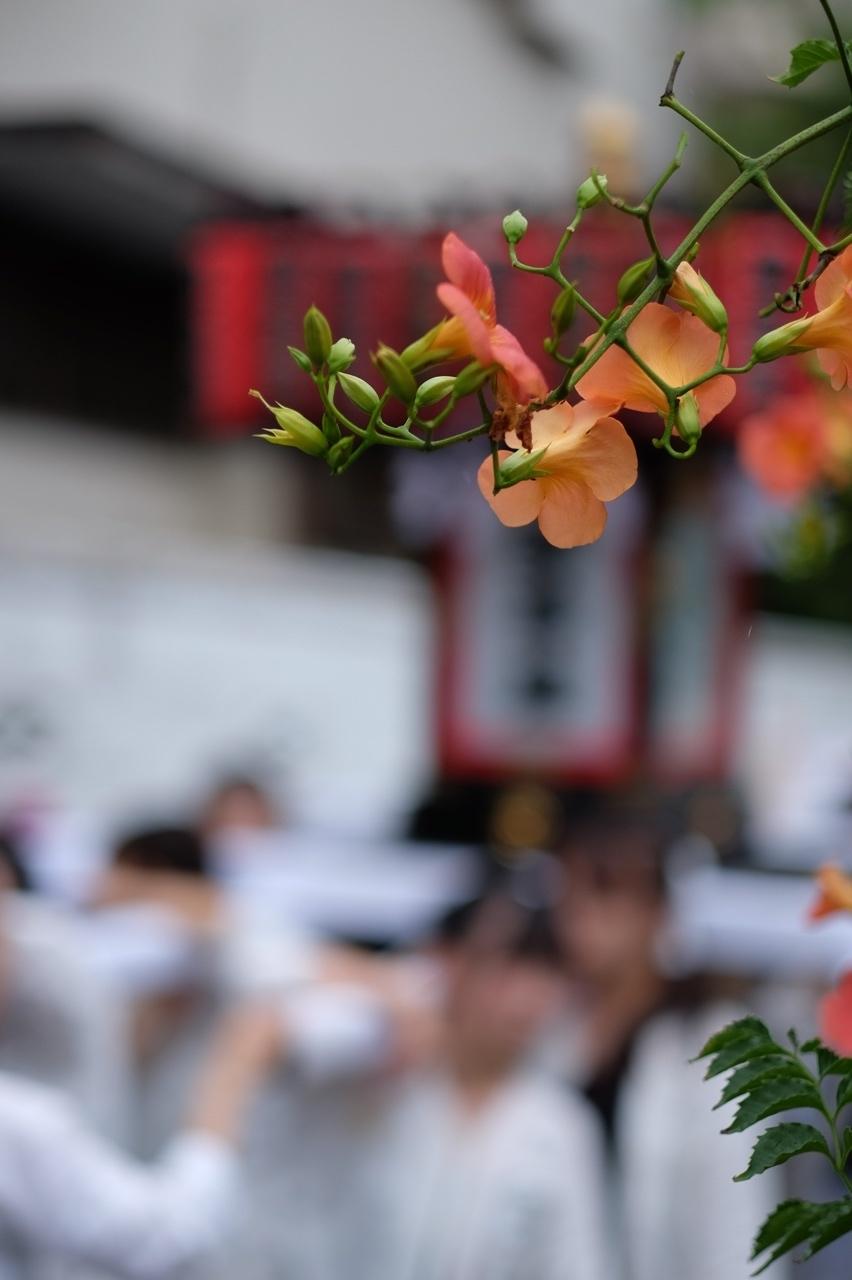 令和元年 秋谷神明社御祭禮−5_f0156448_19271064.jpg