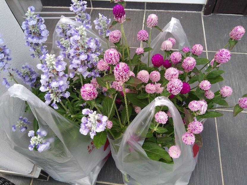 夏花壇にチェンジ。_f0098671_12080359.jpg