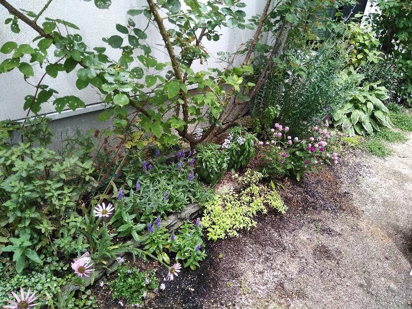 夏花壇にチェンジ。_f0098671_12091821.jpg