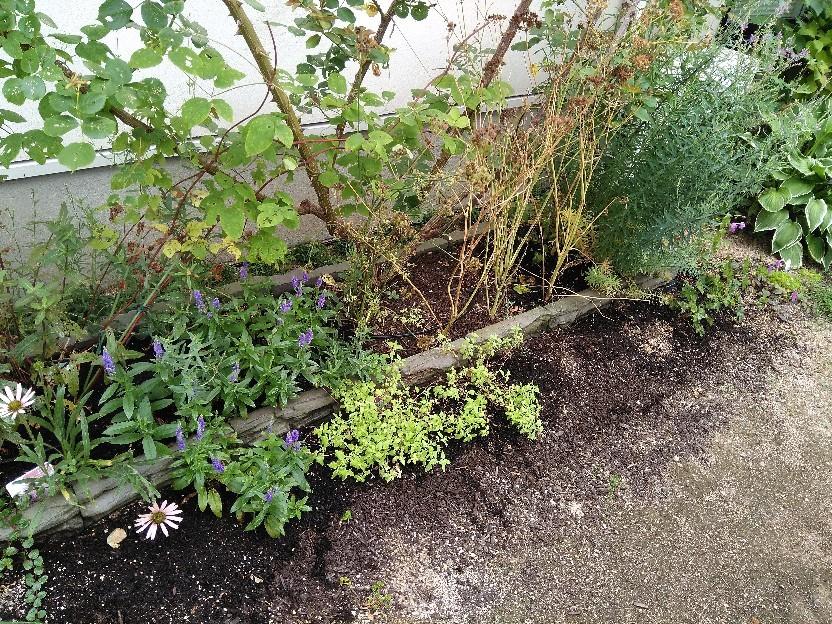 夏花壇にチェンジ。_f0098671_12093306.jpg