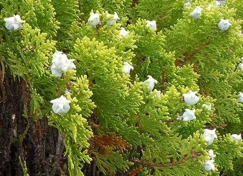 路傍の花、樹々の鳥(348) ~ ピーチク、パーチクと ~_b0102572_10002782.jpg