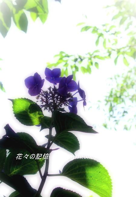 勇気・・_c0357781_09035463.jpg