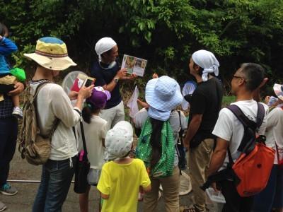2019 昆虫観察ウォーキング~タマムシを見に行こう 開催します!_a0247891_09250049.jpg
