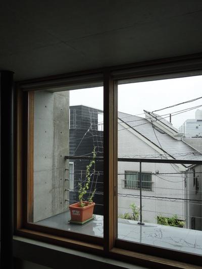 ゴーヤー・グリーンカーテン成長中_a0122098_16451968.jpg