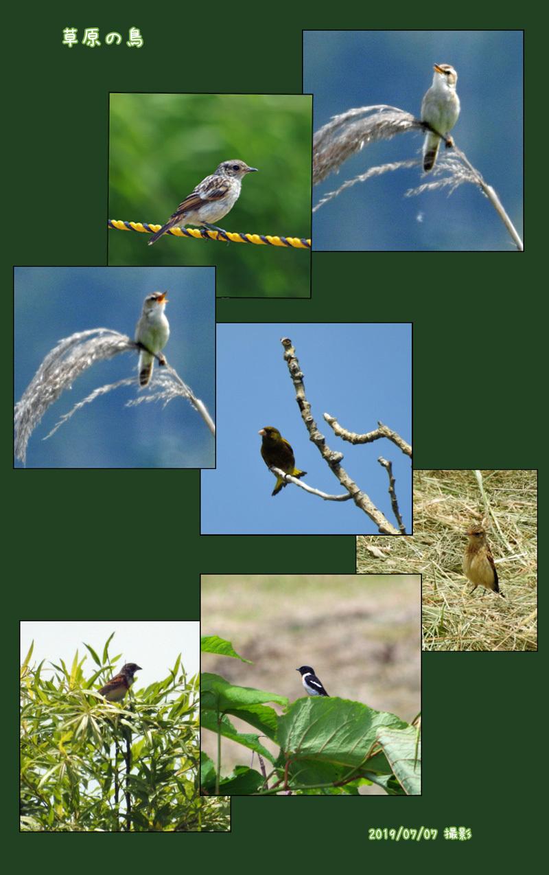最近の孫の写真と草原の鳥の写真_b0019313_16512340.jpg