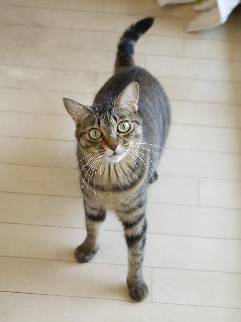 猫のお留守番 琥珀ちゃん編。_a0143140_21182371.jpg